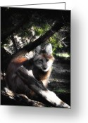 Barry Styles Greeting Cards - Maned Wolf 3837 Greeting Card by Barry Styles