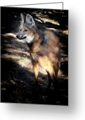 Barry Styles Greeting Cards - Maned Wolf 3854 Greeting Card by Barry Styles