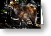 Barry Styles Greeting Cards - Maned Wolf 3861 Greeting Card by Barry Styles