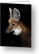 Barry Styles Greeting Cards - Maned Wolf 3865 Greeting Card by Barry Styles