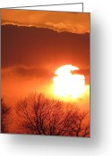 Mango Greeting Cards - Mango Sunset Kansas Tree Silhouette Greeting Card by Rebecca Overton