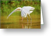Morph Greeting Cards - Mangrove Dancer Greeting Card by Dennis Goodman
