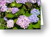 Purples Greeting Cards - Manifestations of Spring Greeting Card by Michelle Wiarda