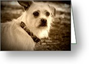 Man Greeting Cards - Mans Best Friend Greeting Card by Leah Moore