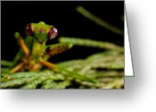 Mantis Greeting Cards - Mantis Greeting Card by Tim Nichols