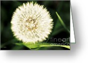 Greens Framed Prints Greeting Cards - Many Wishes Dandelion Greeting Card by Jayne Logan Intveld
