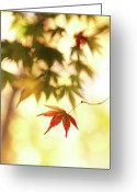 Maple Leaf Greeting Cards - Maple Leaf Greeting Card by Higrace Photo