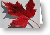 Red Maple Greeting Cards - Maple Leaf Red 1 Up Close Greeting Card by Nancy Teague