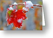 Maple Leaf Greeting Cards - Maple Leaf with Snow Greeting Card by Alan Lenk