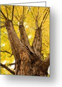The Lightning Man Greeting Cards - Maple Tree Portrait Greeting Card by James Bo Insogna