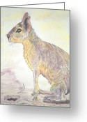 Hare Mixed Media Greeting Cards - Mara patagonica Greeting Card by Arte Ivanna