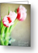 Folded Greeting Cards - March Tulips Greeting Card by Darren Fisher