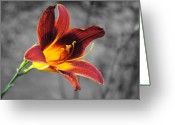 Fragrant Flowers Greeting Cards - Margos Lily Greeting Card by Jai Johnson