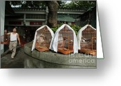 Misfortune Greeting Cards - Market vendor selling caged birds Greeting Card by Sami Sarkis