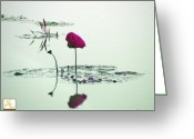 Lily Pad Greeting Cards Greeting Cards - Marooned Greeting Card by Albert Stewart