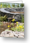Flower Show Greeting Cards - Marsh Marigolds Greeting Card by Anne Gilbert