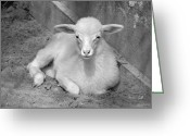 Kid Photo Greeting Cards - Marys Little Lamb... or Kid in Black and White Greeting Card by Suzanne Gaff