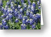 Blue Bonnets Greeting Cards - Mass of Blue Bonnets Greeting Card by Linda Phelps