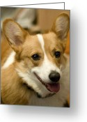Head-shot Greeting Cards - Max Greeting Card by Laurie With