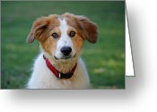 Mutt Greeting Cards - Max Greeting Card by Sandy Keeton