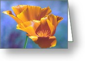 Chris Anderson Photography Greeting Cards - May California Poppies Greeting Card by Chris Anderson