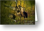 Sandhill Greeting Cards - May I Have This Dance Greeting Card by Lianne Schneider