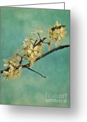 May Greeting Cards - Mayblossom Greeting Card by Priska Wettstein