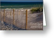 Beach Grass Greeting Cards - Mayflower Beach Greeting Card by Susan Cole Kelly