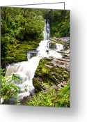 Dark Moss Green Photo Greeting Cards - McLean Falls in the Catlins Greeting Card by Ulrich Schade