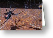 Black Widow Greeting Cards - Me And My Shaddow Greeting Card by Tish Kennedy