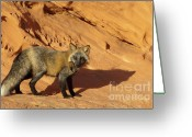 Vulpes Greeting Cards - Me and My Shadow Greeting Card by Sandra Bronstein