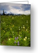 Paintbrush Photo Greeting Cards - Meadow Beneath the Storm Greeting Card by Mike  Dawson