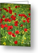 May Greeting Cards - Meadow with tulips Greeting Card by Elena Elisseeva