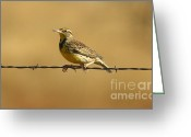 Business Decor Greeting Cards - Meadowlark And Barbed Wire Greeting Card by Robert Frederick