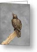 Wildlife Sculpture Greeting Cards - Meadowlark Greeting Card by Karen  Peterson