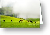 Graze Photo Greeting Cards - Meadows of Heaven Greeting Card by Syed Aqueel
