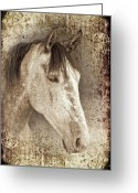 Dressage Photo Greeting Cards - Meet The Andalucian Greeting Card by Meirion Matthias