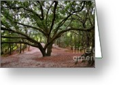 Live Oak Trees Greeting Cards - Meeting place of the old ones Greeting Card by David Lee Thompson