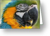 Exotic Birds Greeting Cards - Mele E Manono la ea Macao Greeting Card by Sharon Mau