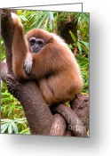 Henry Doorly Zoo Greeting Cards - Mellow Greeting Card by Christine Belt