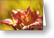 Morn Greeting Cards - Mellow Greeting Card by Reflective Moments  Photography and Digital Art Images