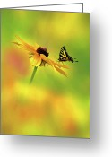 Betty Greeting Cards - Mellow Yellow Greeting Card by John  Poon