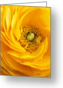 Flowers Greeting Cards Greeting Cards - Mellow Yellow Greeting Card by Kathy Yates