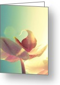 Pink Flower Prints Greeting Cards - Melody Greeting Card by Amy Tyler