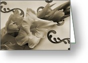Gladiolus Greeting Cards - Melody of Gladiolus. Greeting Card by Terence Davis