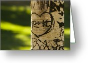 Initials Greeting Cards - Memories in the Aspen Tree Greeting Card by James Bo Insogna