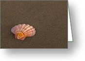 San Simeon Greeting Cards - Memories Greeting Card by Jeffrey Campbell