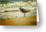 Sandpiper Greeting Cards - Memories of Summer Greeting Card by Amy Tyler