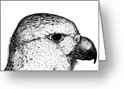 Eagle Drawings Greeting Cards - Merlin Eagle Greeting Card by Karl Addison