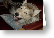 Puppies Greeting Cards - Merry Mikey Greeting Card by Ross Powell